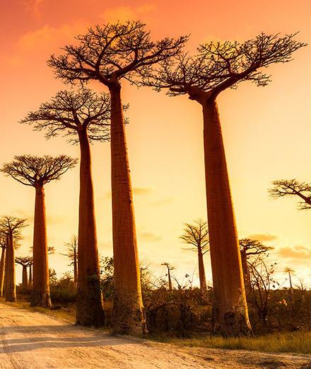 Hành trình du lịch vùng đất sinh thái Châu Phi