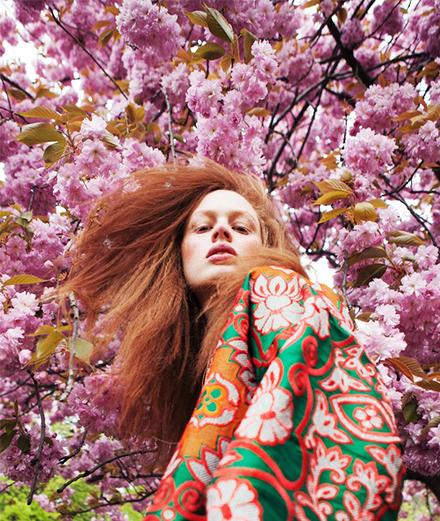 Hoa anh đào: Sắc xuân dịu dàng xứ Phù Tang