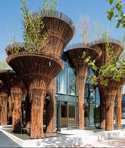 Biophilic Design: Kiến trúc của cuộc sống