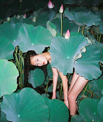 Hoa sen: Hơn cả 1 loài hoa đẹp