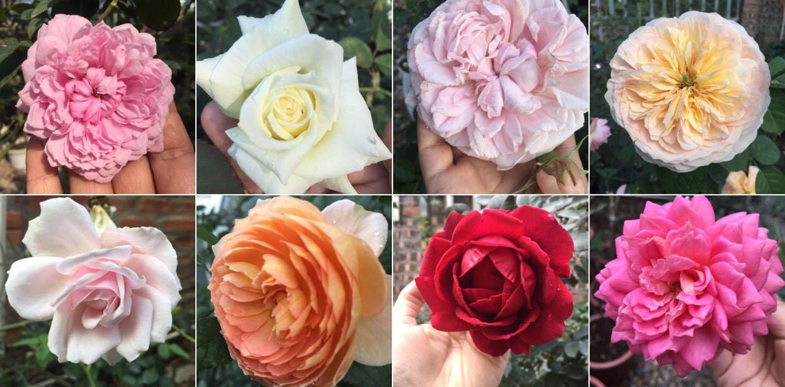 Gửi cả đại dương hoa hồng thắm